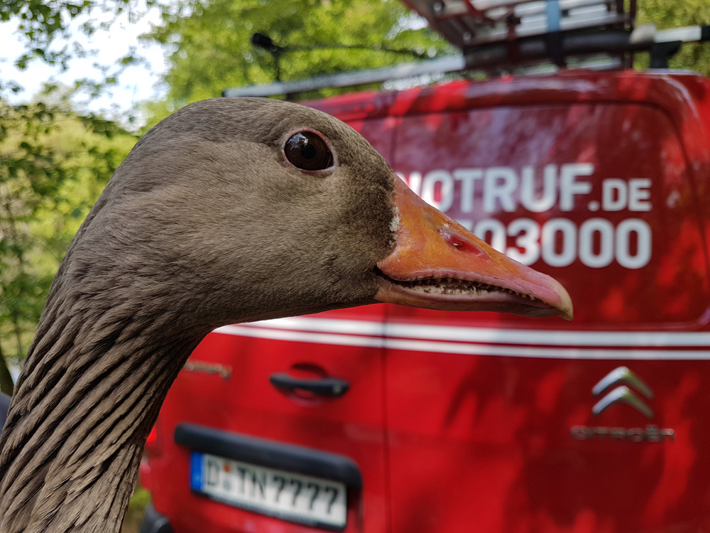 Verletzter Wasservogel - Tiernotruf e.V.