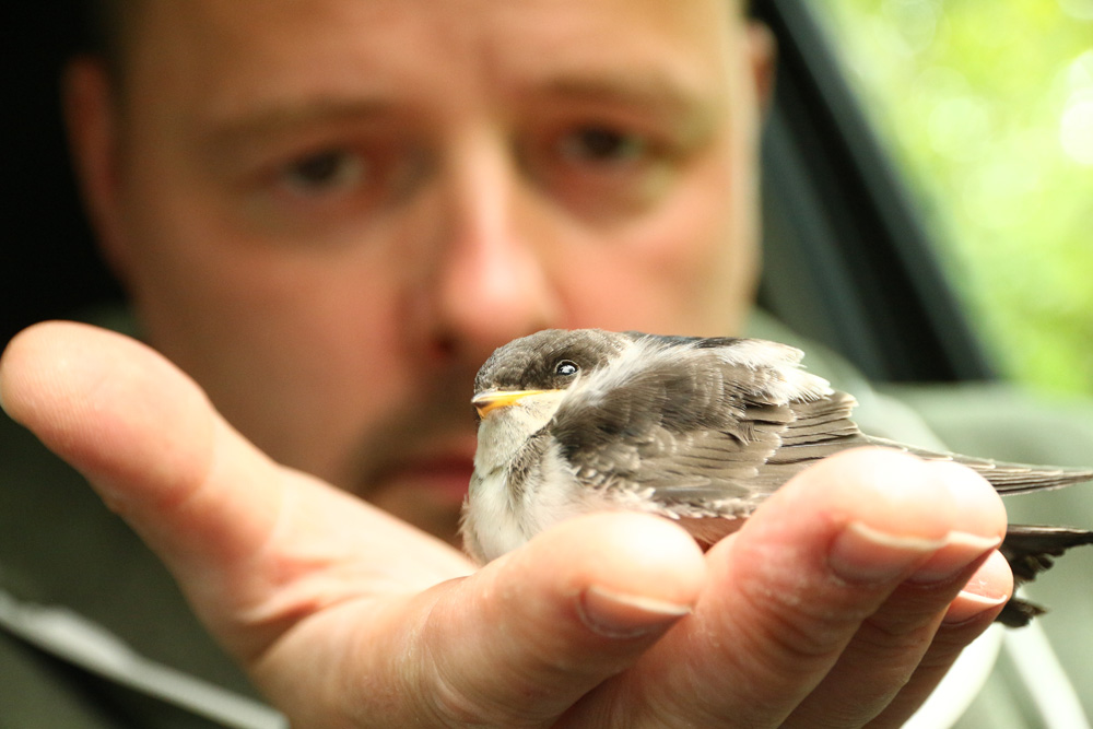 Vögelbaby Rettung - Tiernotruf e.V.