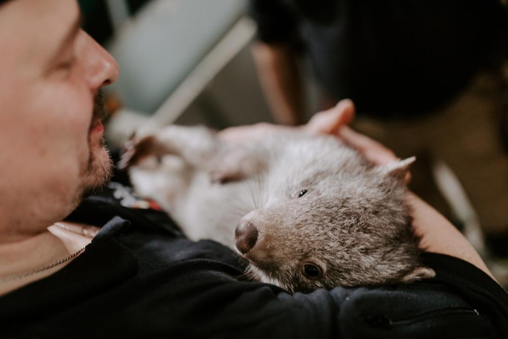 Koala Rettung - Tiernotruf e.V.