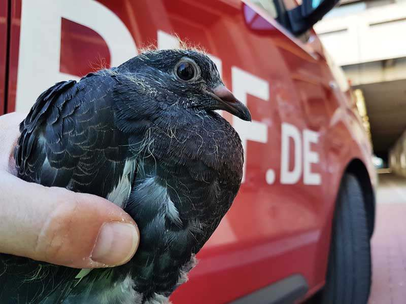 Tiernotruf Düsseldorf – Tiere Allgemein