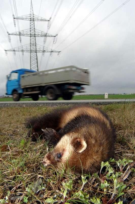 Tiernotruf e.V. Düsseldorf – Wildunfälle